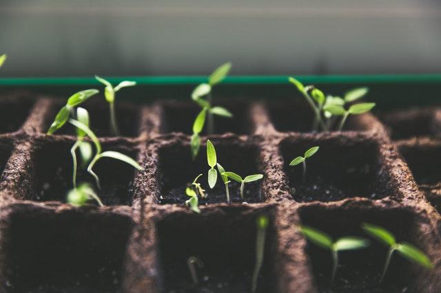 semenáčky v půdě